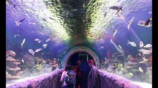 New York Aquarium SHARK TUNNEL Complete tour #IloveNYA #NYC #nyaquarium