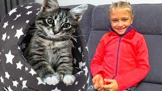 Домик для котика - Ярослава и бал хризантем | Видео для детей