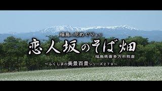 福島の花めぐりより ~喜多方市熊倉 恋人坂のそば畑~