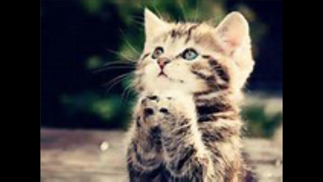 爆笑 おもしろ動物画像集 笑って癒される Part Youtube