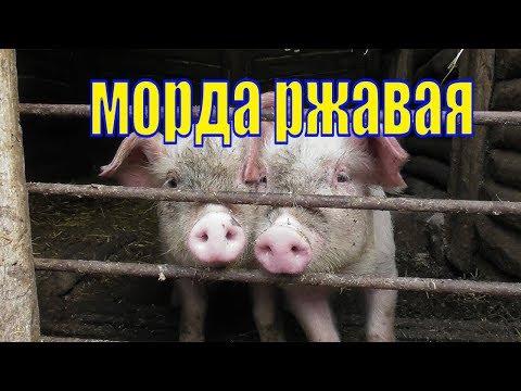 VLOG /НИЖНИЙ ИКОРЕЦ /НАС УГОЩАЮТ МЫ УГОЩАЕМ