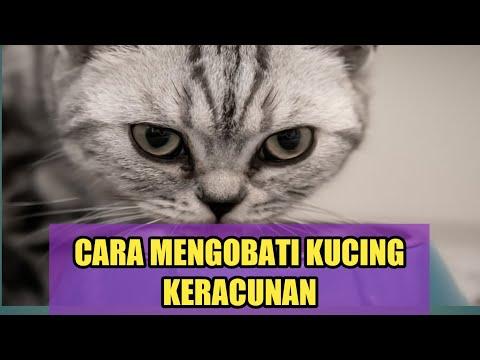 Ciri Ciri Kucing Keracunan Dan Cara Mengobatinya Youtube