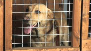 The Ashton Dog Kennel And Run System From Timberbuild