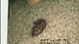 Waking the Dead Cockroach
