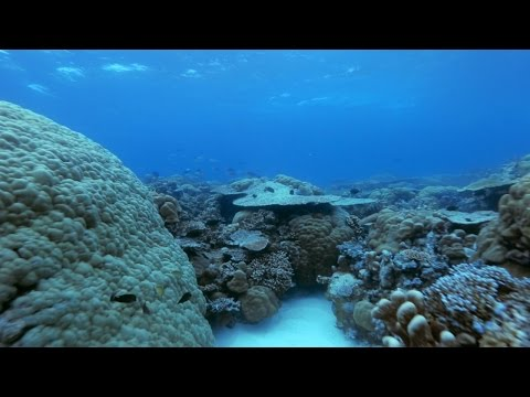 Why We Need to Protect Palau