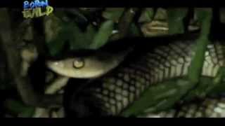 Doc Nielsen finds a new record of snake species | Born to be Wild