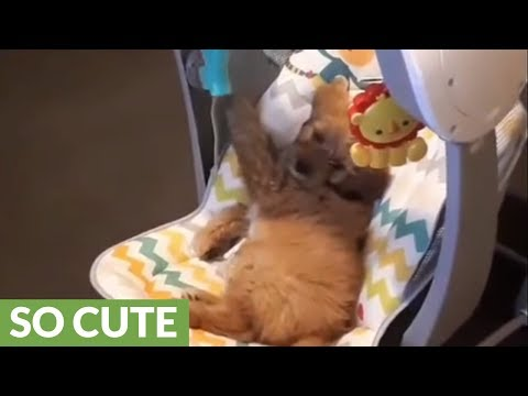 Puppy adorably plays in baby's rocker