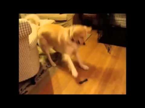 Dogs and Cats Dancing to the song Happy by Pharrell Williams