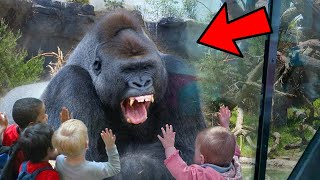People Who Escaped Very Close Calls With Wild Animals (Wild Animal Encounters)