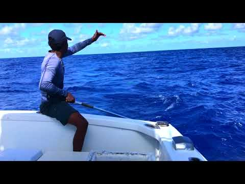 Deep Sea Fishing In Punta Cana