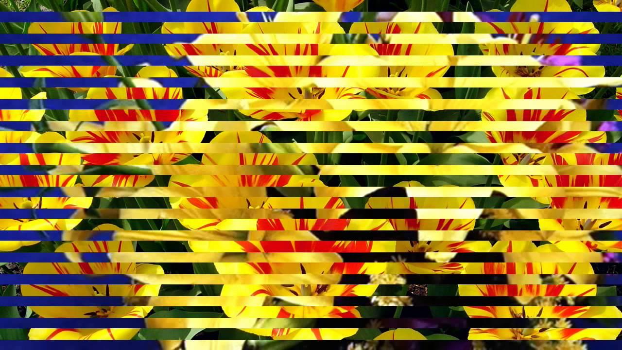 Download Blumen aus dem fremden Land Calimeros