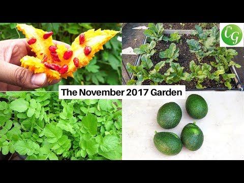 The November Garden – California Gardening Episode For November
