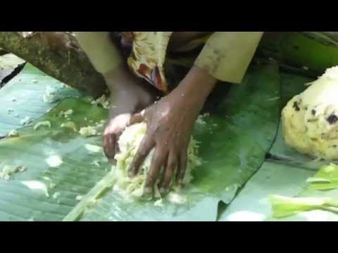 False Banana (Ensete ventricosum) Preparation in Ethiopia - Part III