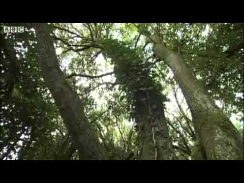 Rare Plymouth Pear Tree Inspires Artist Kurt Jackson