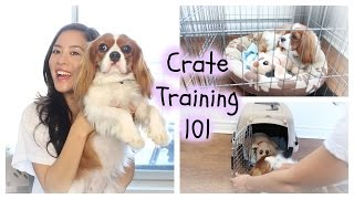 Crate Training | Cavalier King Charles | House Breaking, Potty Training, Play Pen