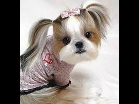 """cute """"puppy haircuts"""""""