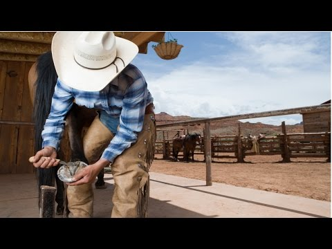 Curso Aparação de Cascos, Correção de Aprumos e Ferrageamento de Cavalos