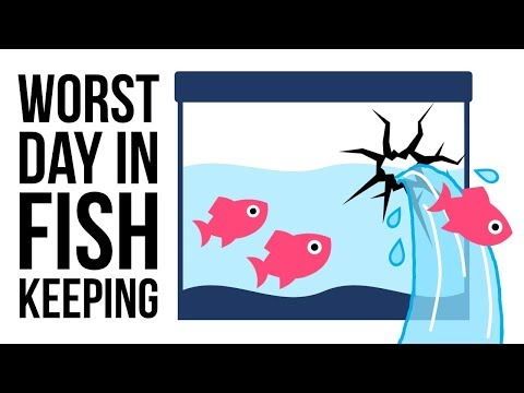 How To Avoid The Top 5 WORST Days In Fish Keeping!