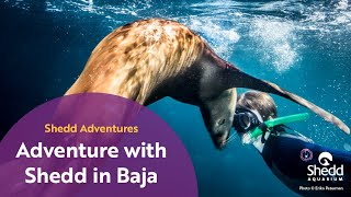 Adventure with Shedd in Baja