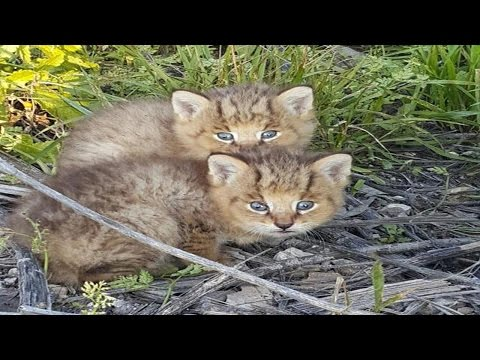 Kittens Found On The Side Of A Road Turn Out To Be A OnceInA Lifetime Discovery