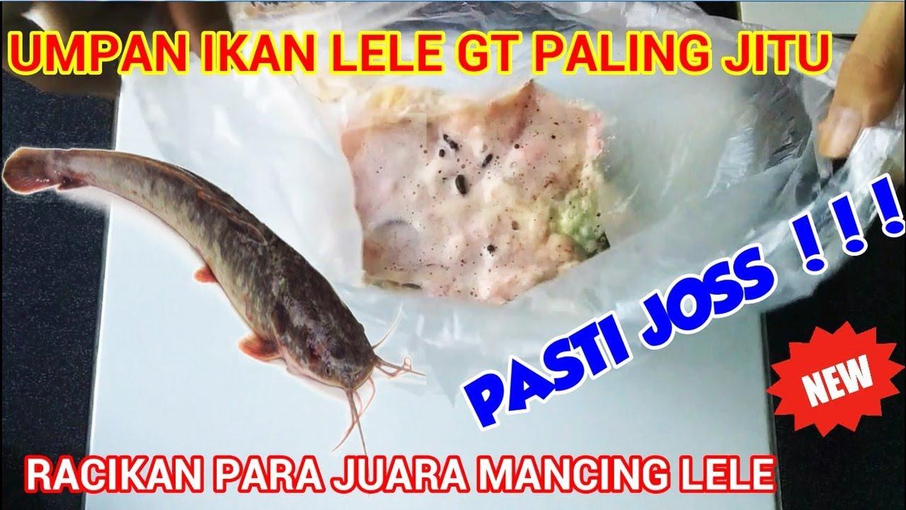 Umpan Ikan Lele Paling Jitu Racikan Juara Mancing Ikan Lele Youtube
