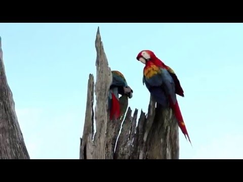 Ecological and socio-economic factors affecting extinction risk in parrots