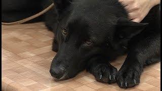 Специалисты рассказали, как югорчанам обезопасить собак от обморожения