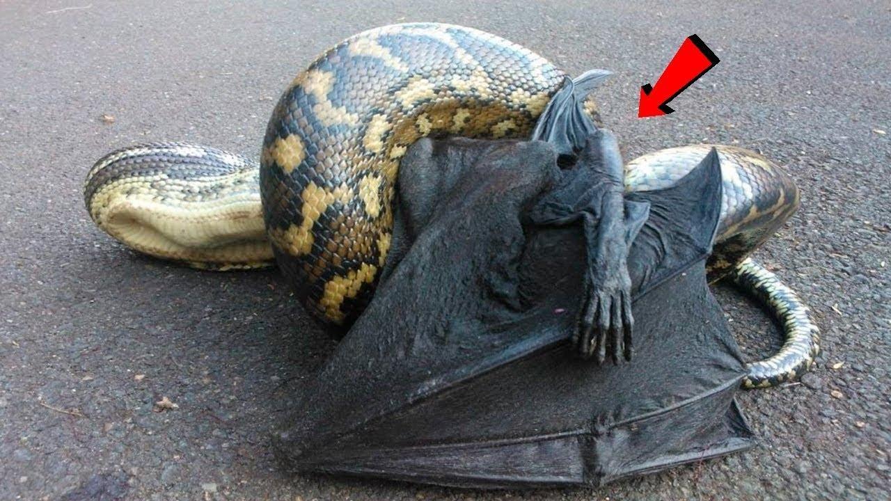 ستنصدم عندما ترى مثل هذا السلوك الغريب للحيوانات .!!