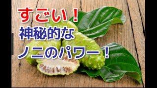 【驚異的!】ノニの栄養素の神秘的なパワー