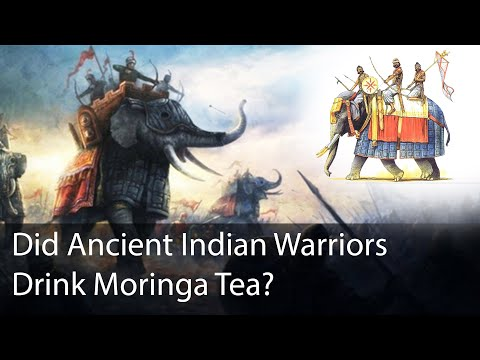 Did Ancient Indian Warriors Drink Moringa Tea For Health And Strength?