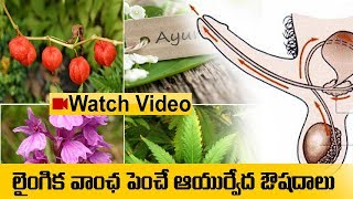 ఆయుర్వేదం ఉపయోగాలు -Ayurveda Home Remedy to increase your Stamina | Ayurveda Home Remedies in Telugu