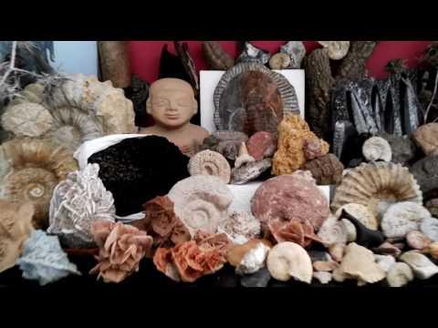 Viviendo con los Ammonites