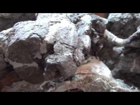 Eagle crags phytosaur skull