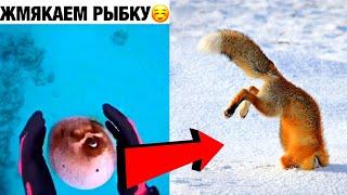 Смешные Животные 2020 / Лучшие Приколы /  Я Ржал Полчаса / Смехотерапия (26)