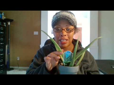 Benefits of Aloe Vera Plant Ways. How to use Plant Medicinal Health