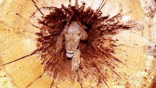 Ormancılar Kestikleri Ağacın İçinde Öyle Bir Şey Buldular ki Dünya Şok Oldu