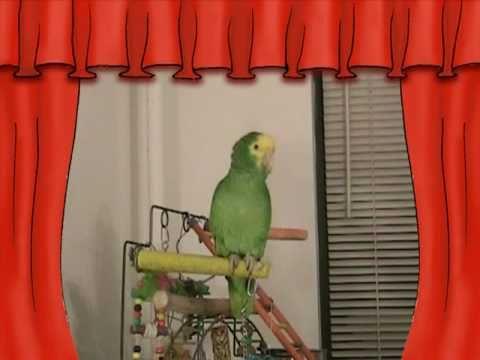 видео: СУПЕР Говорящий попугай Амазон ЮЗИК - super talking parrot on youtube