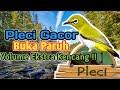 Dahsyat Pleci Gacor Buka Paruh Volume Super Keras  Mp3 - Mp4 Download