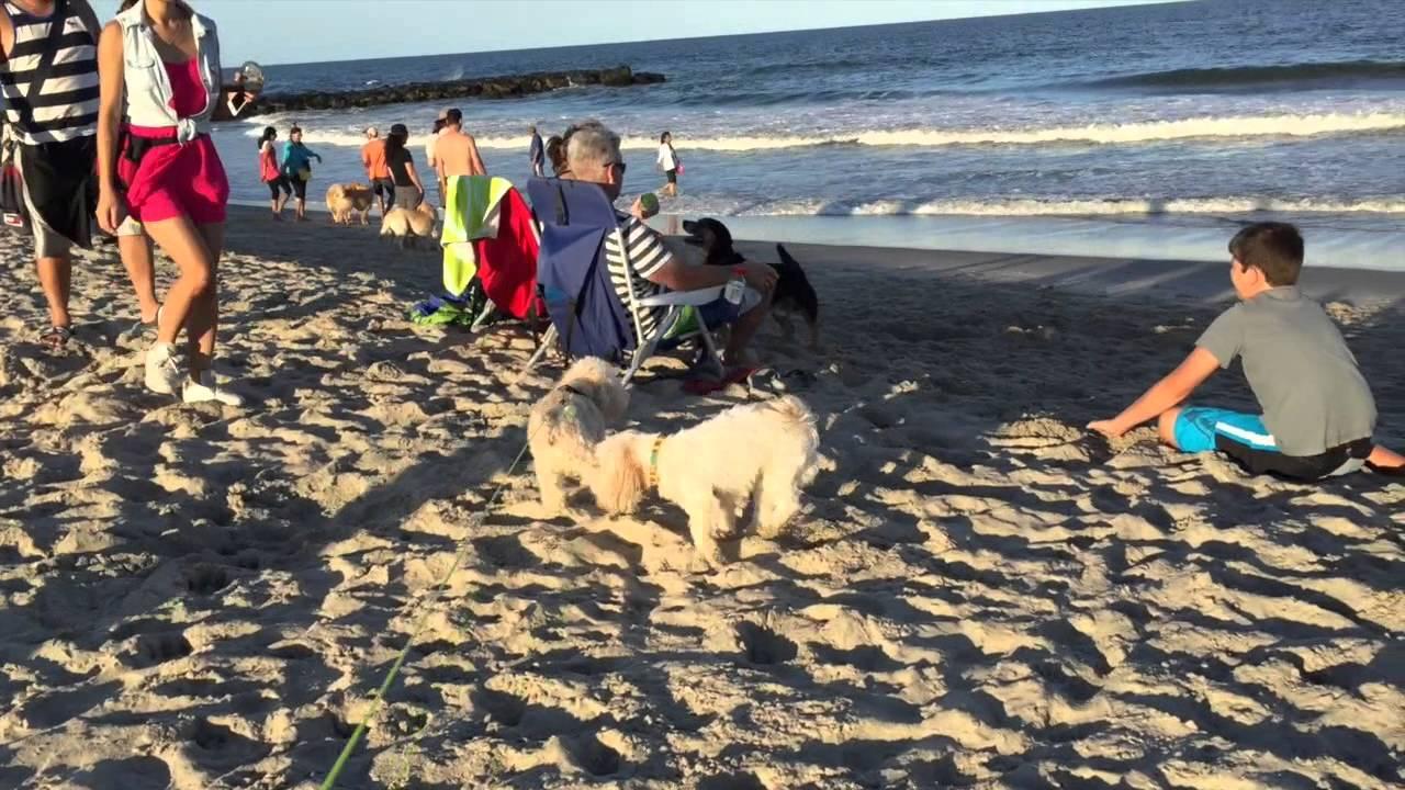 Maddy At Asbury Park Dog Beach