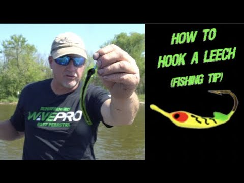 How To Hook A Leech (Fishing Tip)