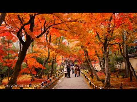 Thumbnail: 京都秋艶 autumn colors momiji leaves in Kyoto Japan 紅葉