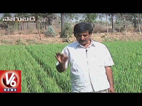 Success Story Of Organic Farmer Gudivada Nagaratnam Naidu | Sagubadi | V6 News