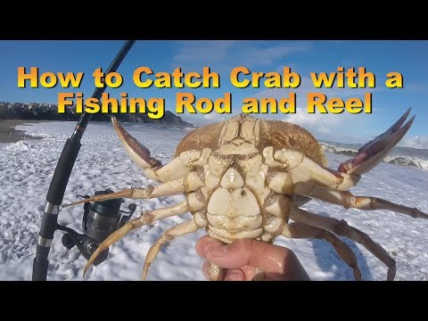 How To Catch Crab With A Fishing Rod