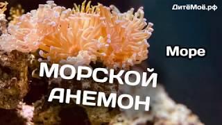 Морской анемон. Энциклопедия для детей про животных. Море