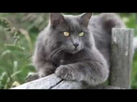20 German cat breeds
