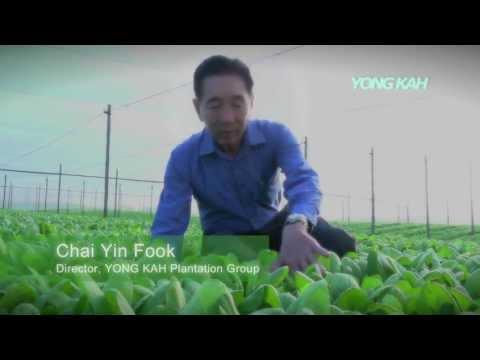 Yong Kah Plantation Malaysia
