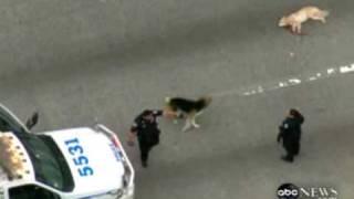 Amazing dog video - dog saves a friend dog on highway
