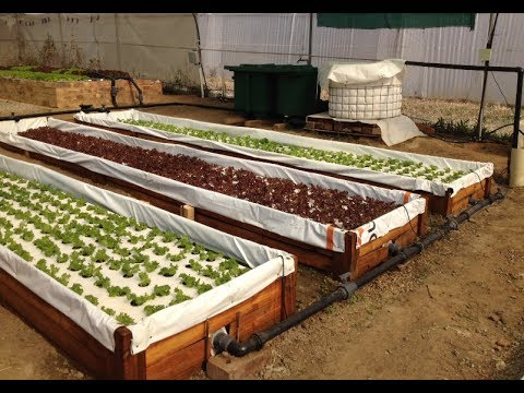How to build a small commercial DWC aquaponics system on a shoestring – For less than $1700
