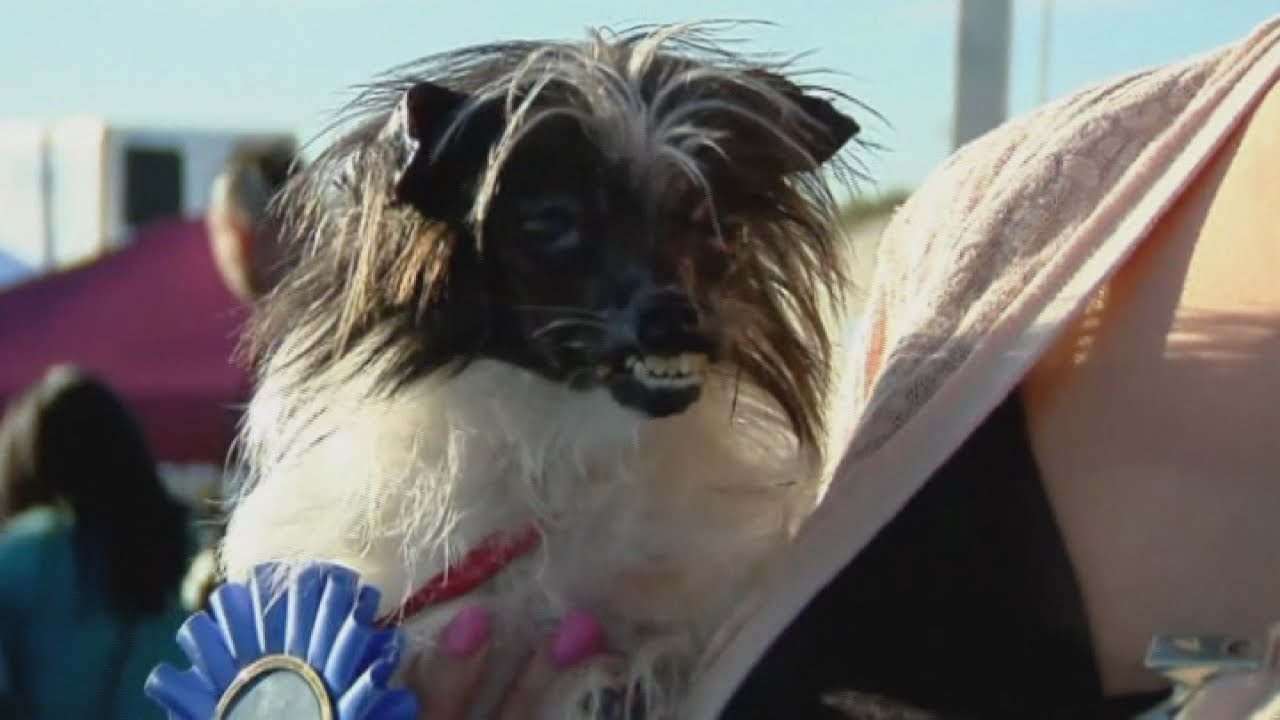 Meet Peanut, the world's ugliest dog