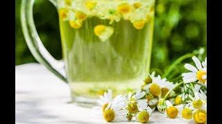 Вот почему наши бабушки обожают ромашковый чай: 9 целебных свойств